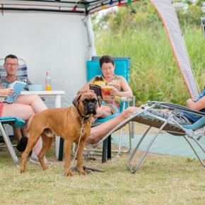 RCN-Toppershoedje-Vakantiepark-in-Zuid-Holland-kampeerplek-met-hond (2)