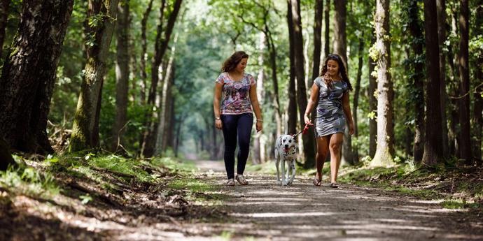 Vakantie met hond in Nederland