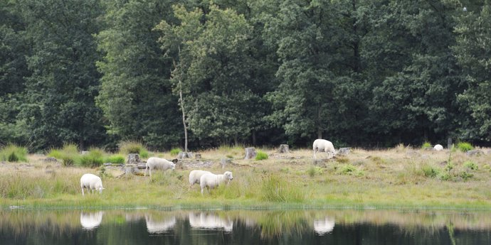 Drents-Friese Wold National Park